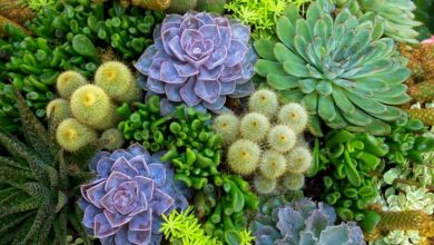 Photo of The Hidden Truths that Succulents have