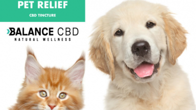 Photo of CBD Oil for Dogs | CBD Oil for Pets | CBD for Dogs Reviewed