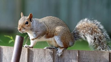 Photo of 4 Tips To Keep Wildlife Out Of Your Home