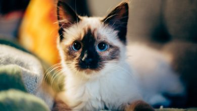Photo of Here's How CBD Can Help Your Pet Cat Health