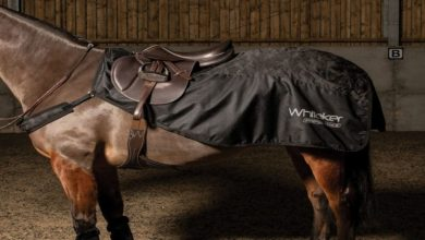Photo of Discount Equestrian: A Secure Shopping Experience