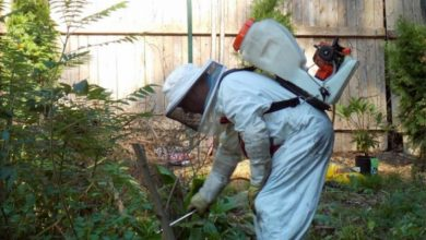 Photo of Periodic pest control: know how to hire a pest control service