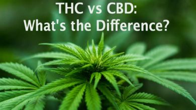 Photo of CBD vs THC: Which Is Better?