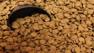 Photo of Pet Food – Here's What Everybody Should Know