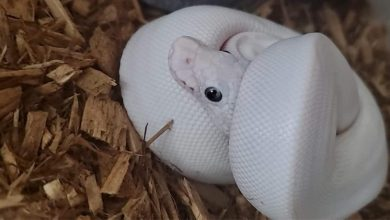 Photo of How expensive is it to own a pet snake?