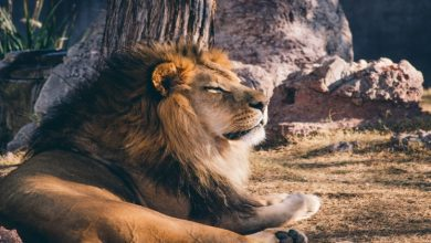 Photo of Leo: the Lion of the Zodiac