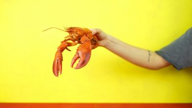 Photo of The Many Health Benefits of Lobster