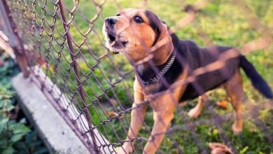 Photo of What Kind of Electric Fence Would Be The Best for your Dog?