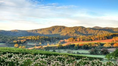 Photo of Visiting Virginia Wine Country