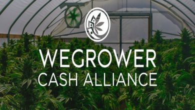 Photo of WeGrower Alliance. Global trader in the cannabis industry